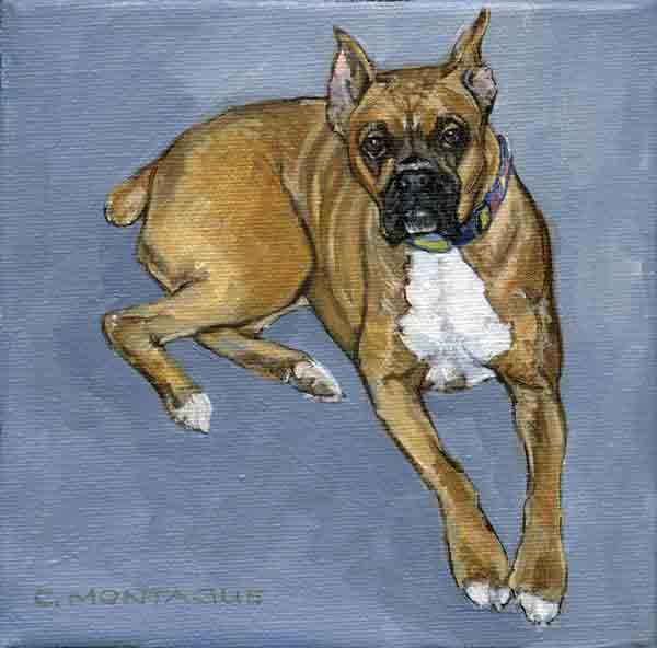 """Little oil painting portrait of a boxer copyright Christine Montague. 6"""" x 6"""" canvas."""