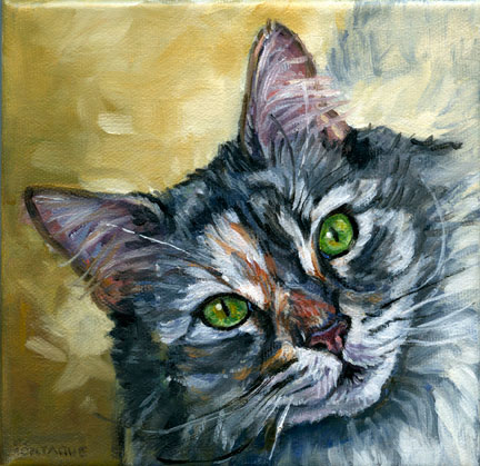 "Main Coon cat portrait. 6"" x 6"" oil painting on canvas by Christine Montague 2014. A portrait this size is 200 CAD. (plus taxes + shipping of applicable)."